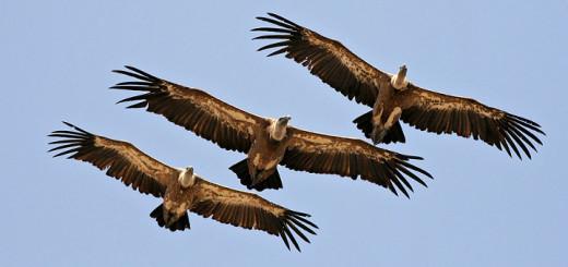 Sui corsi OSS autofinanziati scendono in campo gli avvoltoi